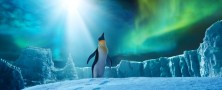 Foto de Happy Feet 2